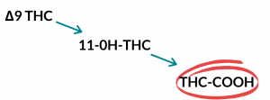 The metabolites of Delta 9 THC which include 11-OH-THC and THC-COOH