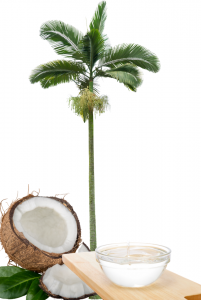MCT oil next to a palm tree and a coconut